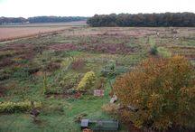 Knoest: 4 hectare natuur, voeding en inspiratie / Op ons terrein bewegen we met de natuur mee. Samen met onze geiten en kippen. Permacultuur is in opbouw. Kringlopen worden ingezet: kortom een nieuwe vorm van landbouwen.