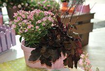 Tipps für den Herbst / Hier meine pastelligen Ideen für deine Herbstbepflanzung. Die Mixe bringen Farbe in den Herbst und machen gute Laune. Sie schmücken deinen Garten bis zum ersten Frost.Wenn du Fragen zu den Kombinationen hast, komm auch gerne auf meiner Homepage www.mygrace-garden.de vorbei. In meinem Block helfe ich dir gern.