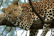 South Africa / by Barbara Wentz