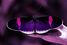 butterflies / butterfly butterflies
