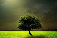 vihreää kuun alla
