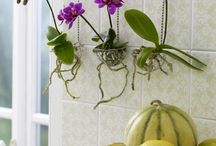 Orchids Hanging Ideas