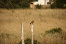 Birds@Quinta Luz do Sol / Bed & Breakfast Algarve Portugal birds
