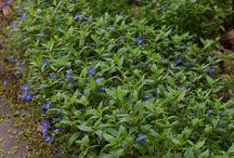 Bluebell Garden /  Spring is in full bloom here!