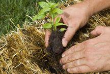 Kertlap / Minden a kertészkedésről