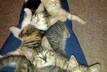 Kitties cute