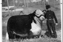 Farm life / by Kasey Grauerholz