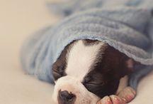 Puppy photoshoot ideas