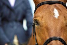 Equestrian Photographers