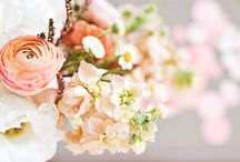 Florals: Coral/Peach / by Social Butterfly