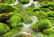 growing moss stream