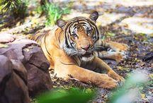 Conservation / Protect wildlife and wildlife habitat