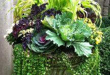 Container Gardens / by Kathy Hamilton Imbery