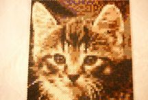 cat Animal Hama