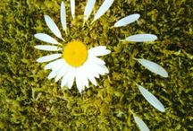 LandArt do přírody i na zahradu / Pro děti i pro dospělé, nápady na tzv. LandArt