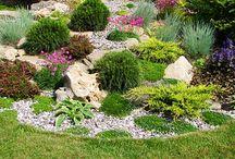 Záhrada-záhony