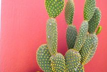 Cactus and Succulents / by Robin L. Jack-Brown