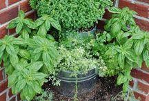 Herbs, plants, gardening