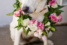 Dogs a with Flowers / Dogs adorned with beautiful flowers for weddings and special events.