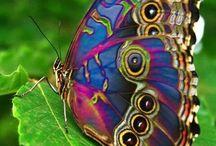 Un papillon né sous le signe de la couleur