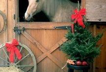 Horse photographs