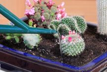 Succulents & Cacti Gardens / Interesting ways to show off these types of plants