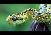 World's 10 Most   Dangerous Snakes - Kickass Facts About Snakes