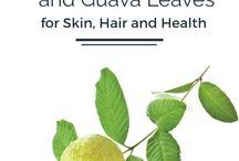 guava artikel