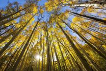 Carbon Sequestration / Plant a Tree