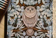 Secret Garden - Owl