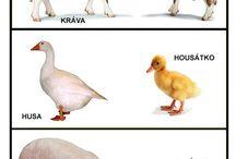 Zvířata + mláďata