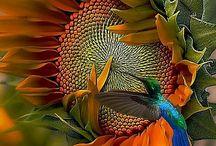 Nature foto