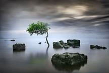 A Little Zen