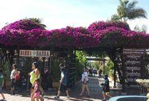 Beachfront Romance in La Jolla