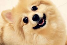 Cute Dogs / Dogs