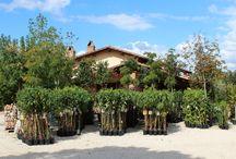 Euro Plants Vivai / Euro Plants Vivai - Azienda Agraria di Floricoltura di Manni Pier Giorgio - Vendita Diretta - Vendita Online. Flower Farming - Direct Sales - Sale Online.