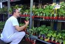 All things Gardening / Gardening | Vegetables | Herbs | Fruit