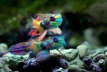 pesci esotici.