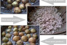 Turtles Fresh food tips