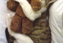 everybody needs a Teddy