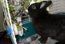 Bella rabbit