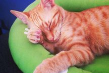 Pixel, my cat <3 / Mi bicho peludo! <3 // cats cat kitty gatos gato mascotas