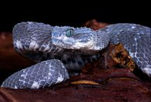 Favorite reptiles / by Stephen Pruitt