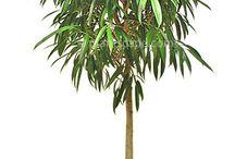 kamerplanten (luchtzuiverend)
