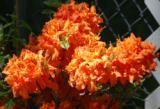Outdoors and Gardening / Outdoors and Gardening