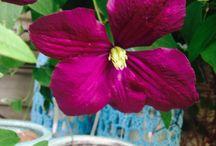 Min have og blomster / Blomster m.m og indretning