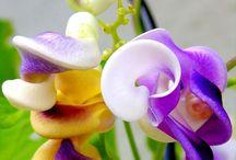 de flor em flor