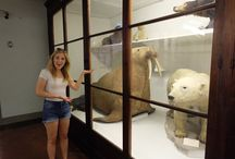 Taxidermy walruses of the world / Uniting taxidermy walruses from museums around the world