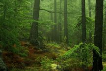# forest #