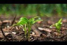 Permacultuur / De term is afgeleid van het Australische woord permaculture, permanent en (agri)culture. Permacultuur is eenontwerpsysteem, waarmee je een functioneel systeem ontwerpt met de sterkte en de veerkracht van een natuurlijk ecosysteem, endat de mens in al zijn behoeften voorziet in samenwerking met de natuur. Het doel van permacultuur is samenwerking tussen de mens en de natuur, gericht op een lange termijnoverleving van beide.